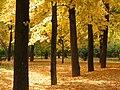 Jardín del Príncipe - Aranjuez - panoramio (1).jpg