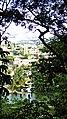 Jardim Botânico. - panoramio (18).jpg