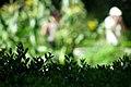 Jardin Botanico (17) (9379325770).jpg