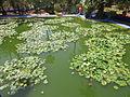 Jardin Majorelle 025.JPG