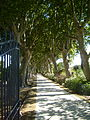 Jardin de Baudouvin Plane Trees.JPG