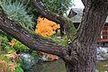 Jardin japonais Toulouse (8603360972).jpg