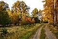 Jesienna droga - panoramio.jpg