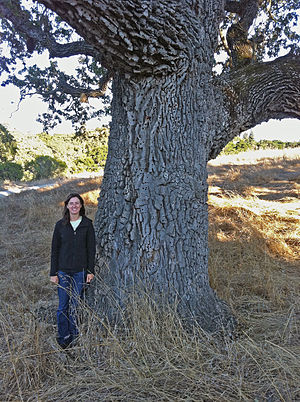 Arastradero Creek - Joan Dudney, former Acterra Steward for Arastradero Preserve, stands by an ancient valley oak (Quercus lobata) just southwest of Arastradero Lake. This tree is over 300 years old and is an acorn granary for acorn woodpeckers (Melanerpes formicivorus).