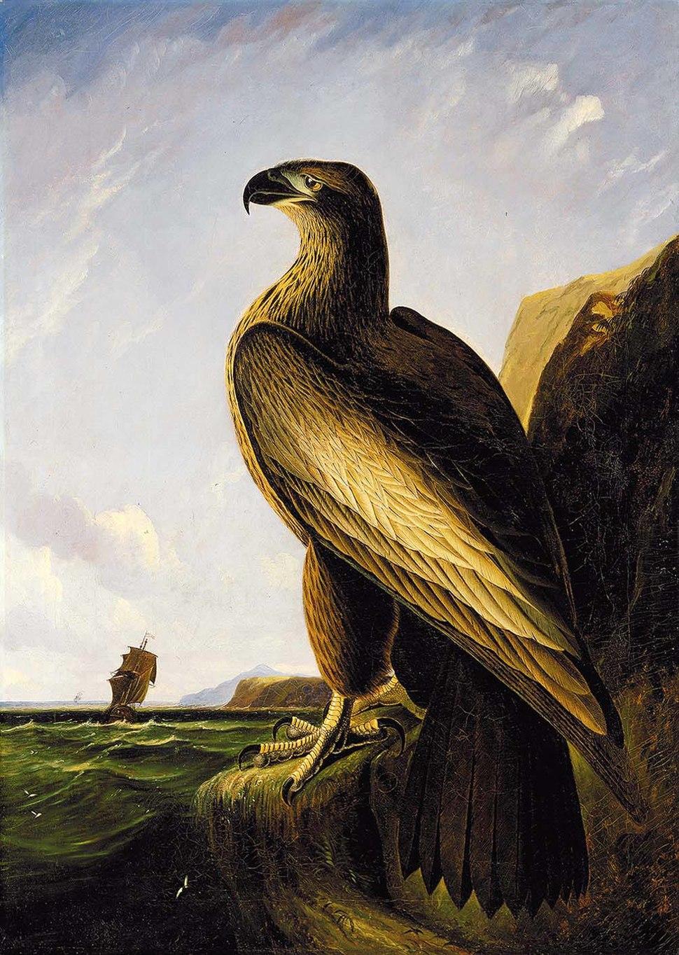 John James Audubon - Washington Sea Eagle
