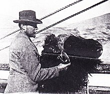 Josef Hammar with the head of a musk ox
