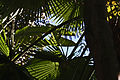 Jungle Canopy (3384934701).jpg