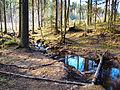 Jyväskylä - stream in forest.jpg