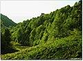 KARTEPE'DE BAHAR ^©Abdullah Kiyga - panoramio.jpg