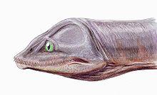 Das angebliche Monster von Lochness 220px-Kaiwhekea1DB