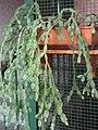 Kaktus (2).jpg