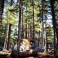 Kalam Forest.jpg