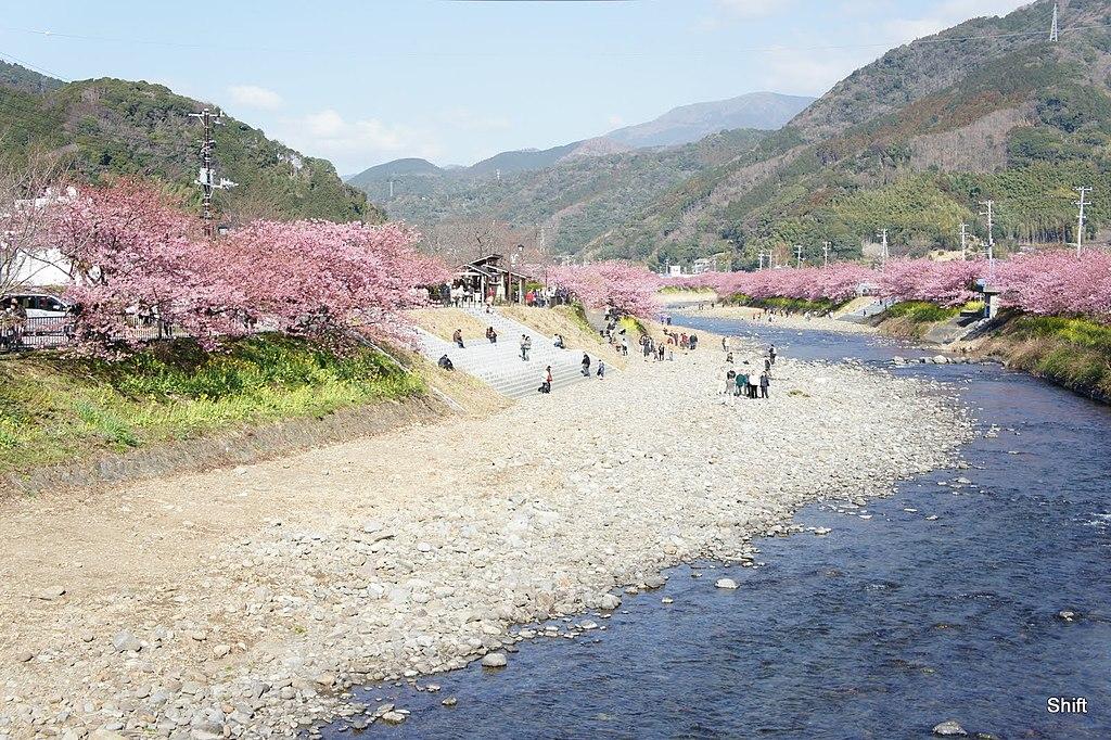 Kawazu river with Kawazu cherry blossom trees 20110226 - panoramio