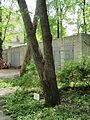Kharkiv natural sanctuary Institute 21.JPG
