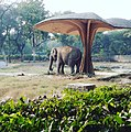 King Elephant relaxing under man made shed.jpg