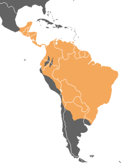 King vulture map with national borders.png