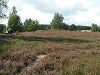 Kirchdorfer Heide.JPG