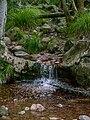 Kirstenbosch National Botanical Garden, Cape Town ( 1060064).jpg