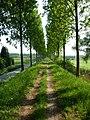 Koning Albertdijk - panoramio.jpg