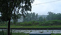 Konkan Railway - views from train on a Monsoon (14).JPG