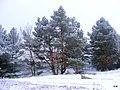 Koronowo - Lipkusz , widok nad brzegiem jeziora - panoramio (3).jpg
