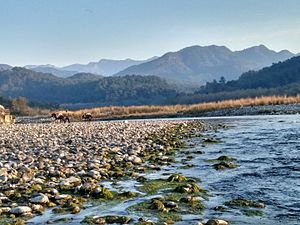 Ramnagar, Uttarakhand - Kosi River flowing through Jim Corbett National Park in Ramnagar