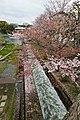 Kyoto, 桜, sakura, Kusagawacho - panoramio.jpg
