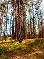 Līksna Parish, LV-5456, Latvia - panoramio (13).jpg