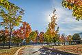 L'automne au Vieux-Port de Montréal (15276623920).jpg