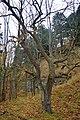 LSG Sudmerberg - Bäume (3).jpg