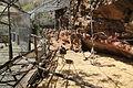 La Palma - Breña Alta - Calle la Cuesta - Maroparque - Dromaius novaehollandiae 05 ies.jpg