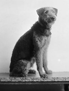 Airedale Terrier owned by Warren G. Harding