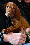 Langley vets care for man's best friend 150127-F-YC840-002.jpg