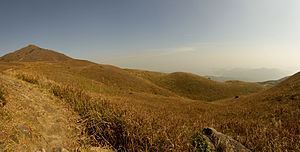 Lantau montane grassland