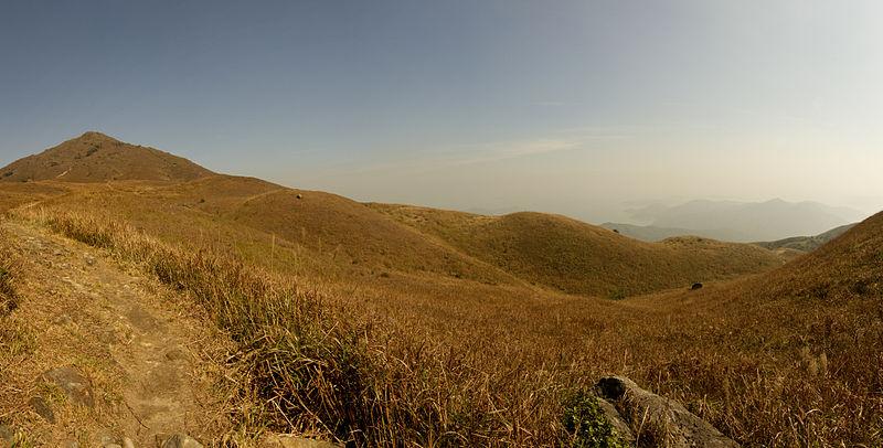 Lantau montane grassland.jpg