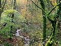 Last autumn colour for 2009^ - geograph.org.uk - 1590025.jpg