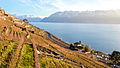 Lavaux Vineyard Terraces on sunset.jpg