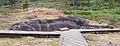 Laxe dos cabalos. Parque arqueolóxico de Campo Lameiro CL11.jpg