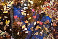 Leaves-autumn-creek - West Virginia - ForestWander.jpg