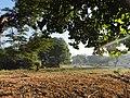 Leaves on field - panoramio.jpg