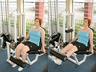 Weight training - The leg extension is an isolation exercise.