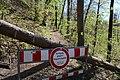 Leitenwälder der Isar 0605.jpg
