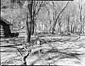 Limbs pruned or fallen from trees in Grotto. ; ZION Museum and Archives Image 107 02 002 ; ZION 8407 (1153a224827c4fff895da6106870e6b9).jpg