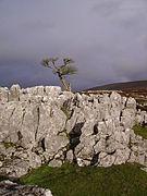 Limestone Outcrop, Leck Fell - geograph.org.uk - 284594.jpg