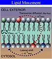 Lipidmove.jpg