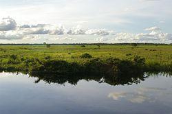 Llanos del Beni, Bolivia.jpg