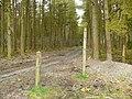 Llwybyr Gwy - Wye Valley Way - geograph.org.uk - 1251810.jpg