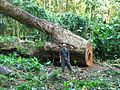 Logging Forest Loss IMG 3939 07.jpg