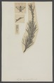 Lyda - Print - Iconographia Zoologica - Special Collections University of Amsterdam - UBAINV0274 002 03 0009.tif