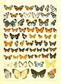 Macrolepidoptera15seit 0283.jpg